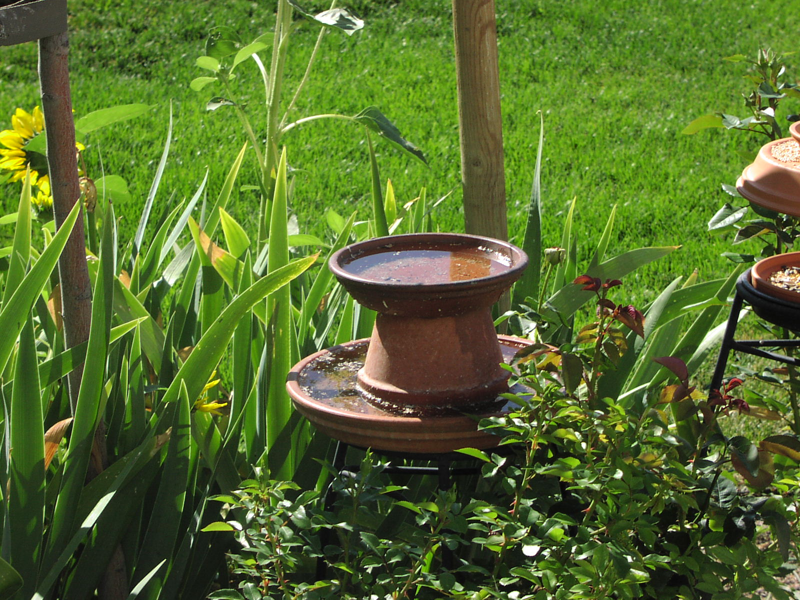Bird bath in front yard in 2005-06
